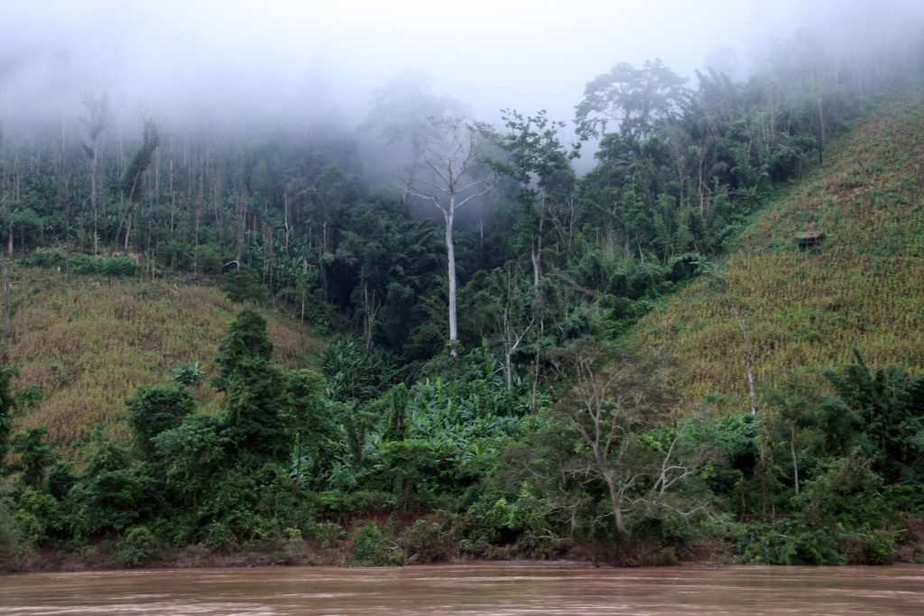 Mekong Jungle Myanmar