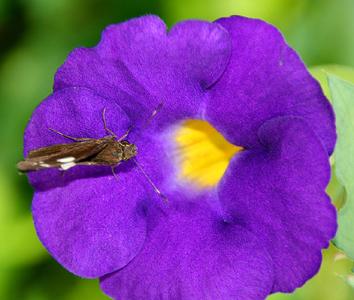 beautiful-flower.jpg