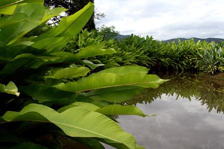 jungle-scenery.jpg
