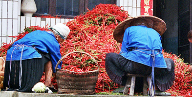 Selecting Chillies