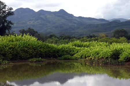 tropical-botanical-gardens.jpg
