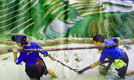 Working  the  Dragon Backbone Rice Terraces