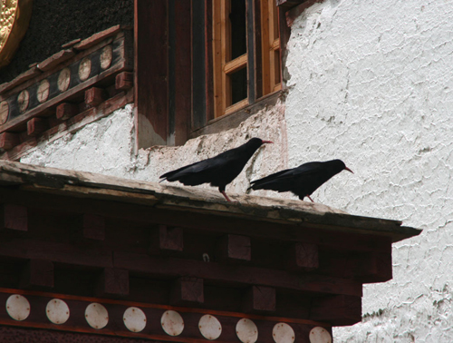 crows Beri Gompa of the Gelukpa Sect