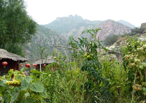 Luming shanzhuang vegetable garden and Helan shan