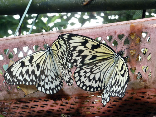 Butterflly Breeding centre in Dinghu Shan