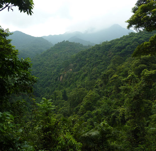 Dinghu Shan Mountain Scenery