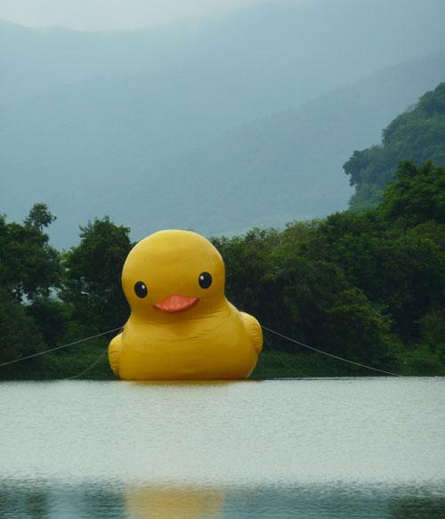 Zhaoqing Duck
