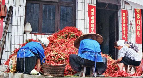 Chili sellers Chong'an Market Chong'an Market 重按市场: Guizhou 贵州省