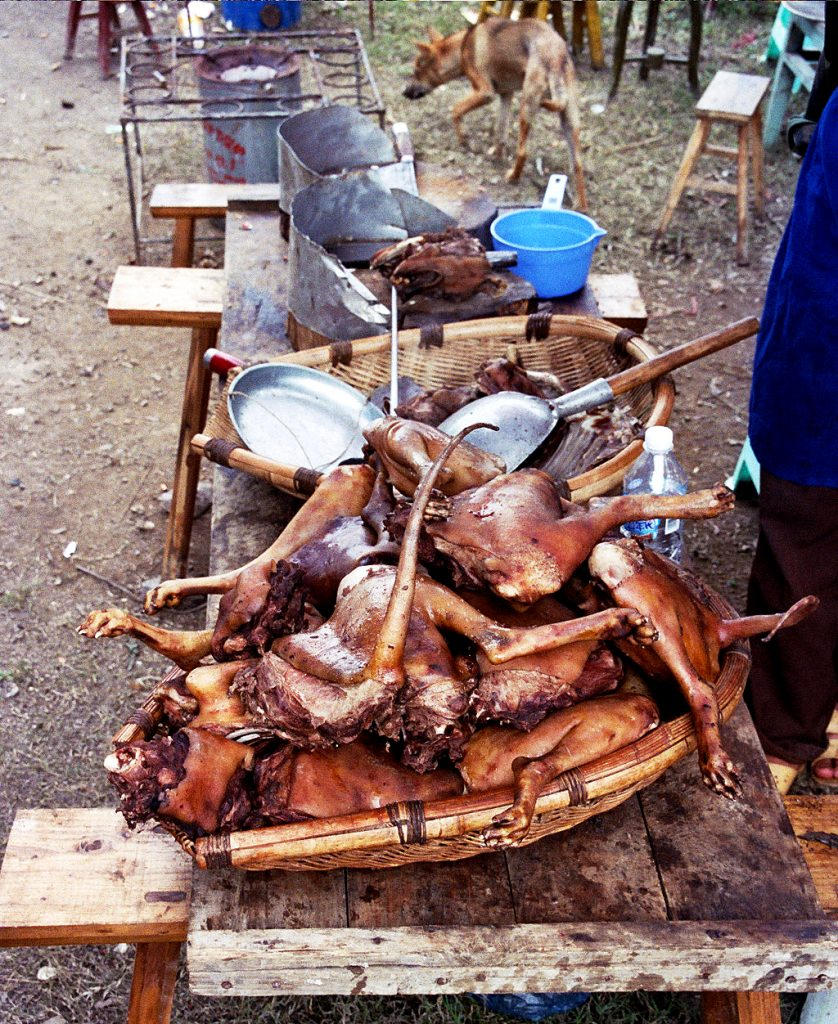 dog meat guizhou