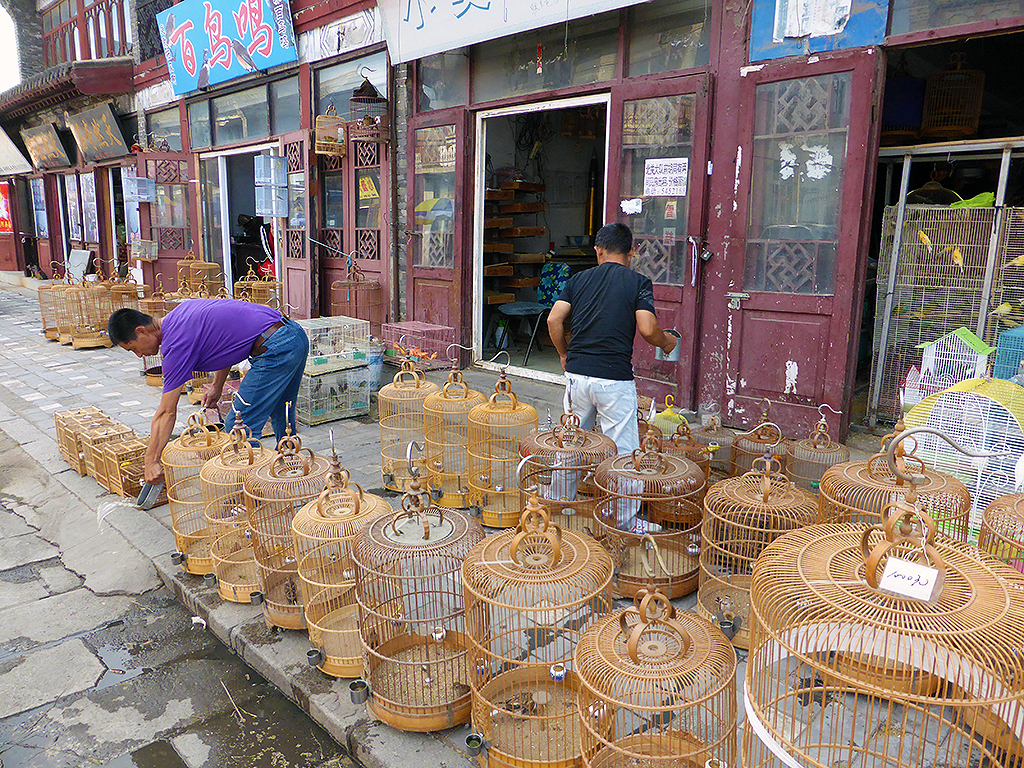 Bird Cages Xincheng