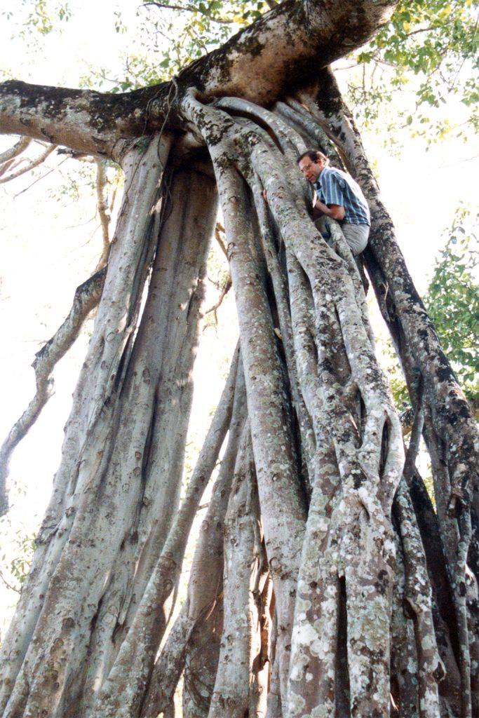 Ruili climbing a giant Banyan tree