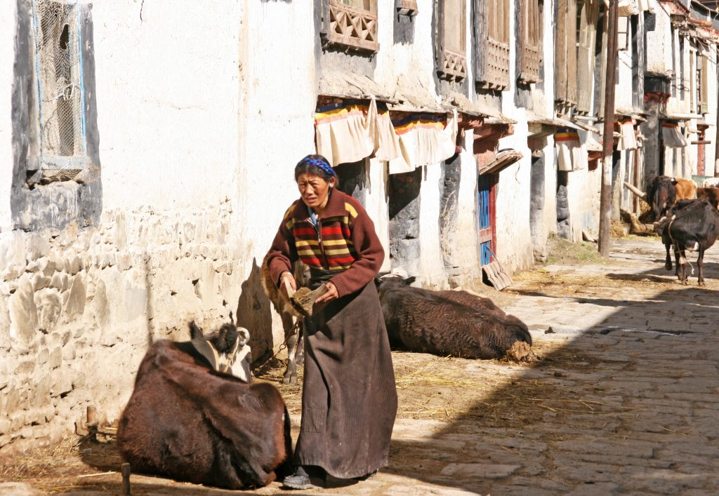 Gyantse Old Town people and cows