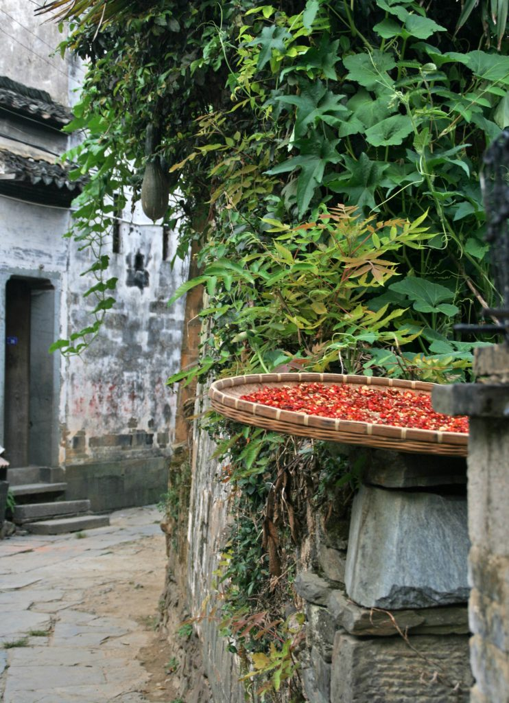 chilis and gourds  Yancun 延村