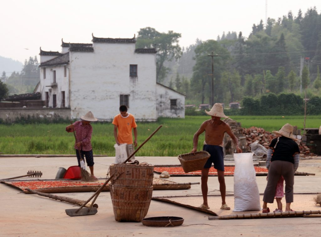 drying chilis Yancun 延村