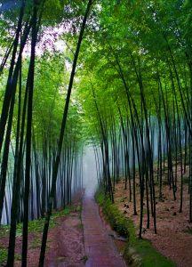 The Bamboo Sea Yibin Sichuan Province