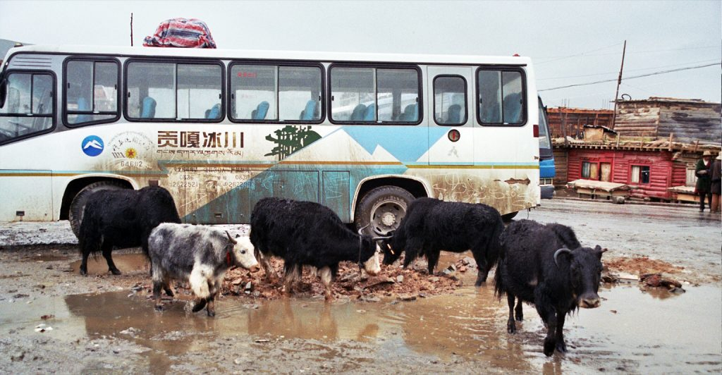 Yaks and bus Manigango