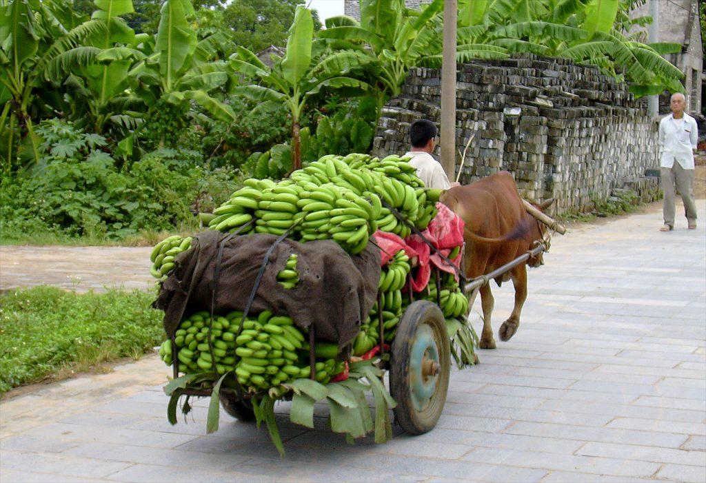 Bananas Yangmei