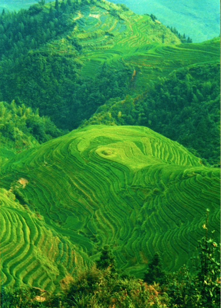 Electric Green Rice Terraces