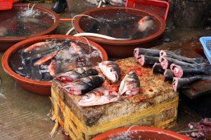 Jinhong Fish Market