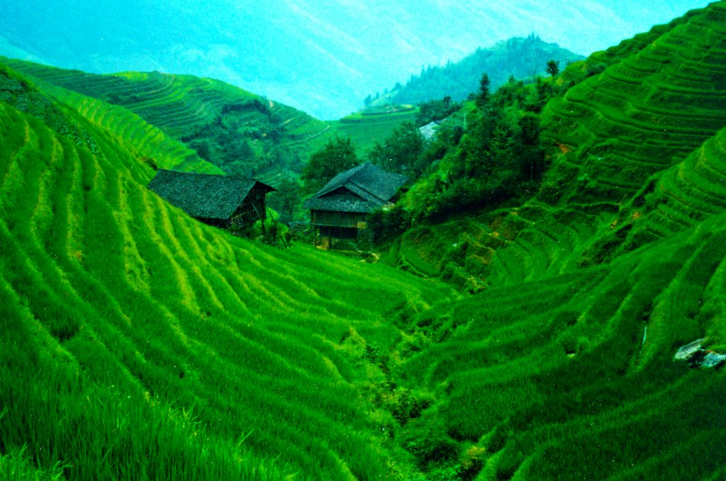 Amazing Electric Green Rice Terraces