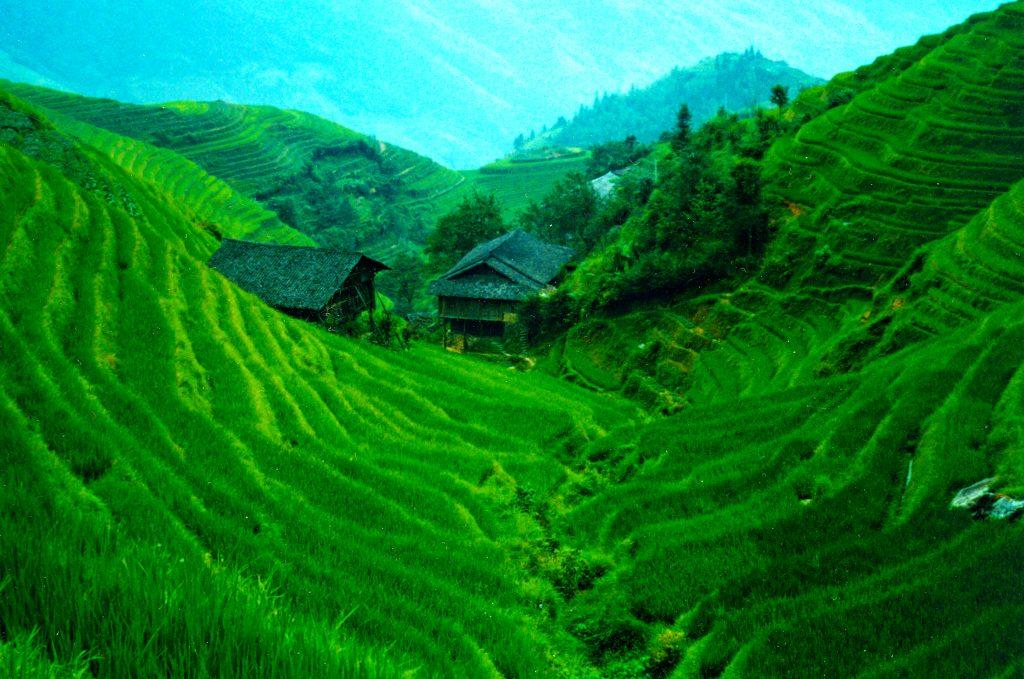 Walking in the rice Fields
