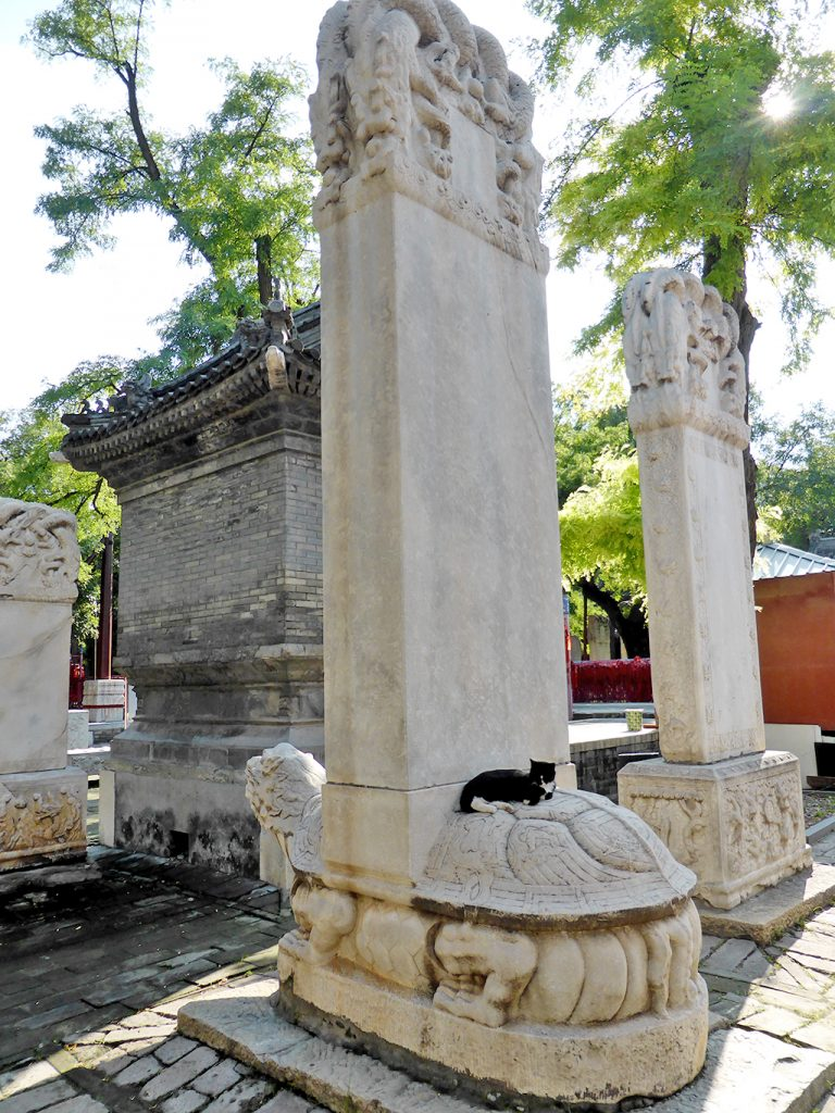 Bixi and cat at the Dongyue Temple Beijing