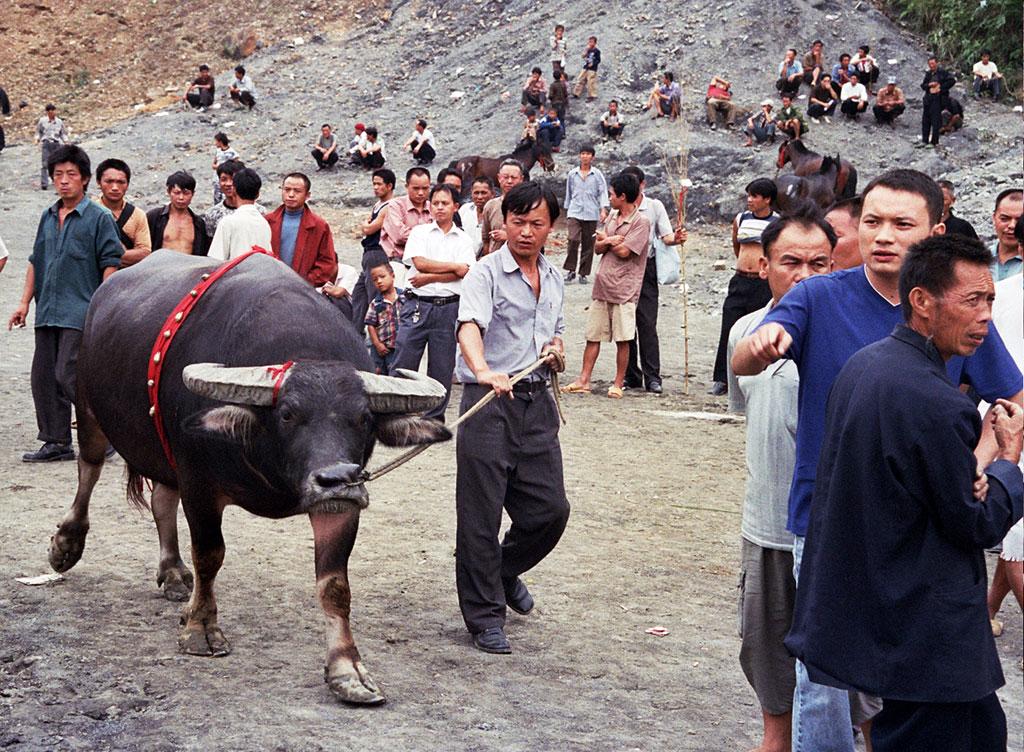 Miao and Bullfighting Guizhou